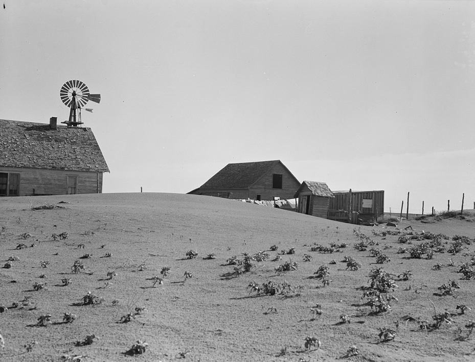 A black and white photograph of a hilly field with small bushy crops and barns peeking out from behind the curve of the hill.